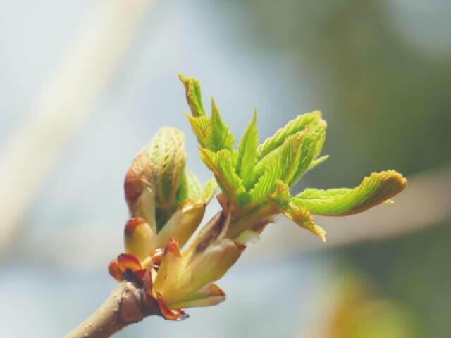 アフィリエイトは植物を育てるイメージで長期運営する