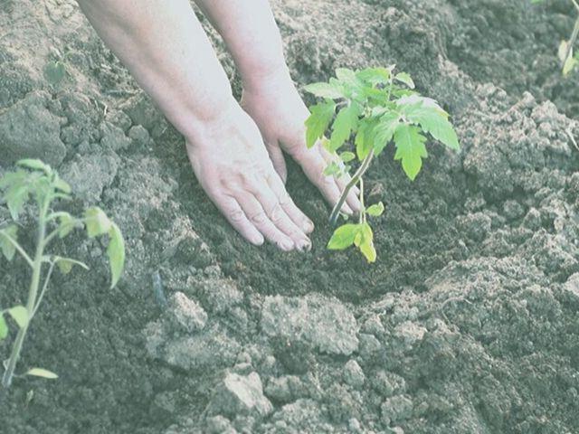 農業は対人関係が少ない